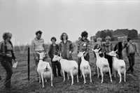 De geiten van Lieuwes