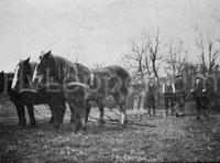 Paarden aan het werk